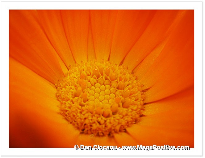 beautiful calendula super macro abstract art modern canvas